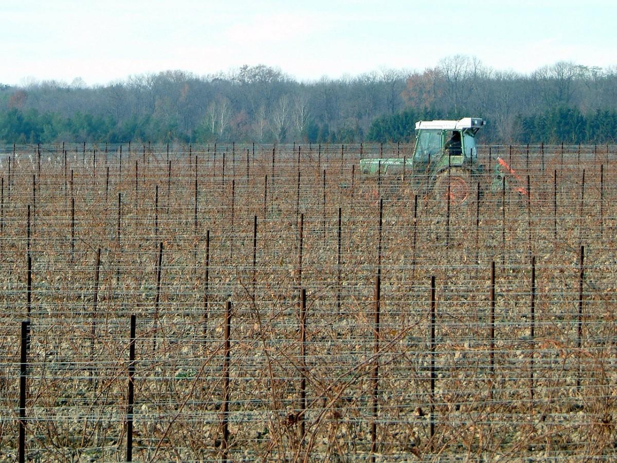 OCM vino Investimenti: prorogati i termini per la consegna