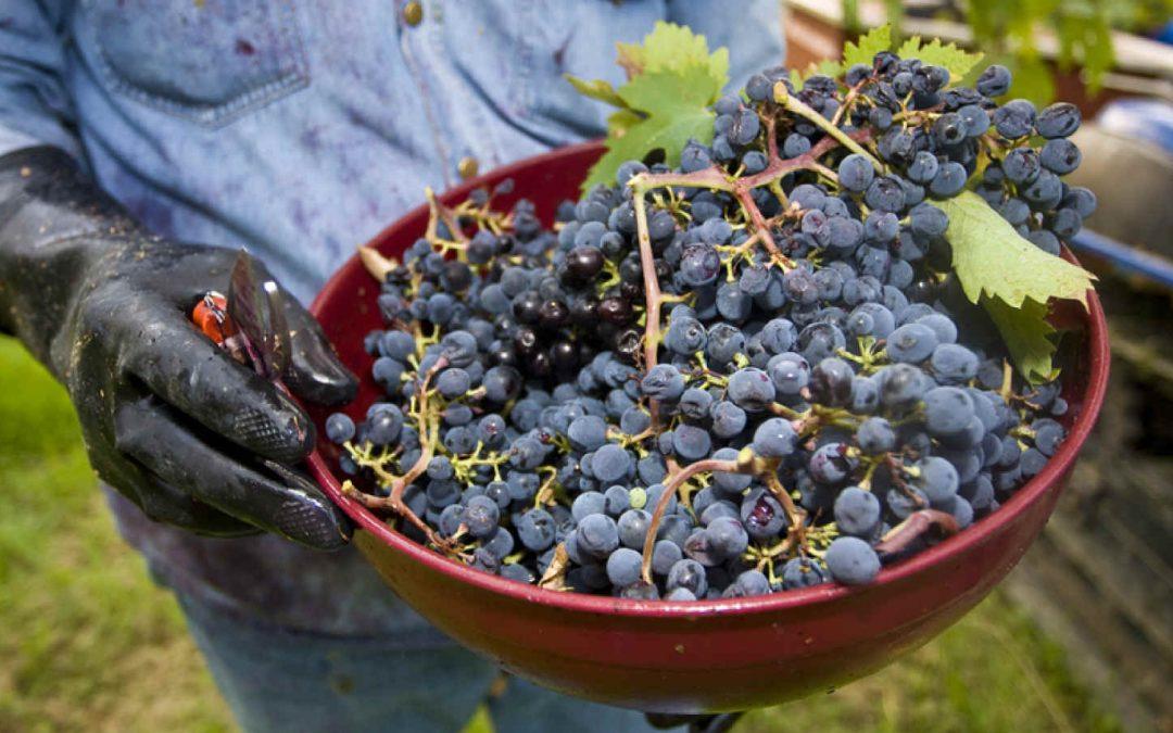 Coronavirus: misure urgenti per tutelare export di vino italiano