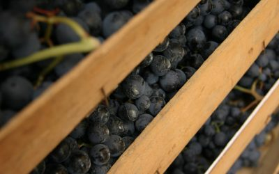 L'Amarone cresce in USA e UK: quale futuro con Brexit e dazi?
