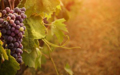 Ocm al 70% e un nuovo Patto per l'Export: buone notizie per il vino italiano