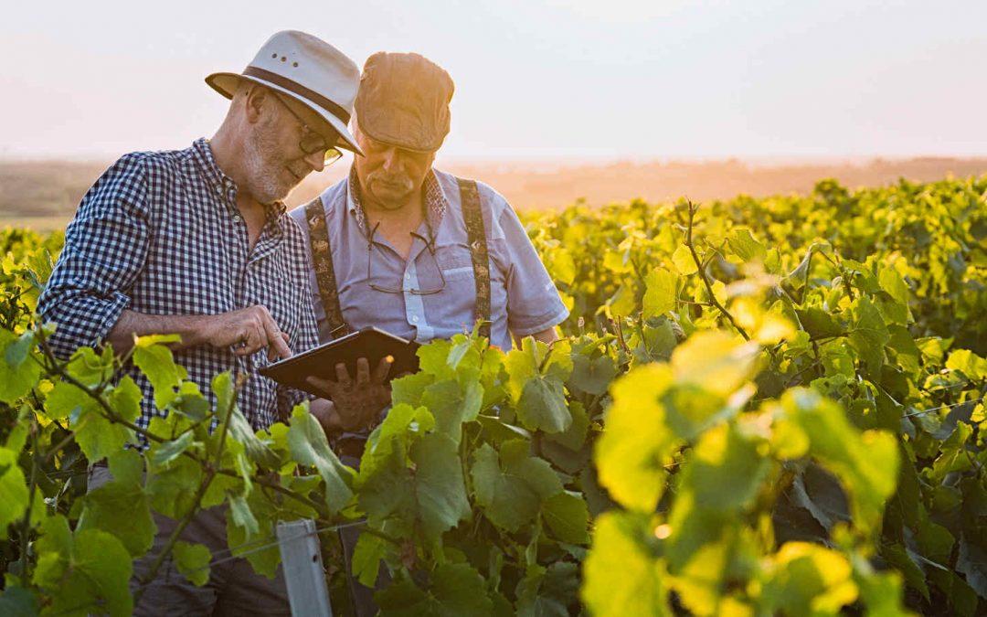 Ricostruire la filiera del vino italiano: ecco le proposte della Bellanova