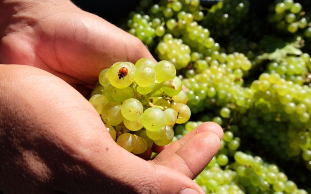 I fondi per il vino guardano al futuro: punteggi per vini biologici e sostenibili