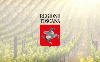 Impianto nuovi vigneti: in Toscana autorizzato l'impianto di 600 ettari